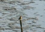 Birdpark_10