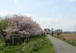 0403tama_river02