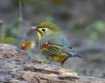 101127_bird